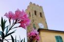 flower-1514089_1920