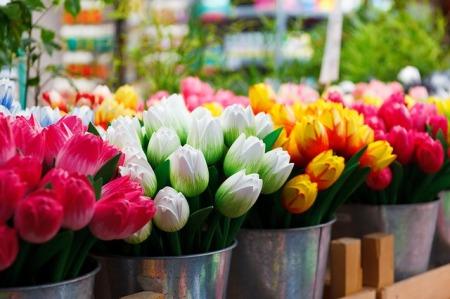 flower-69490_640