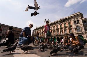 pigeons-229932_960_720